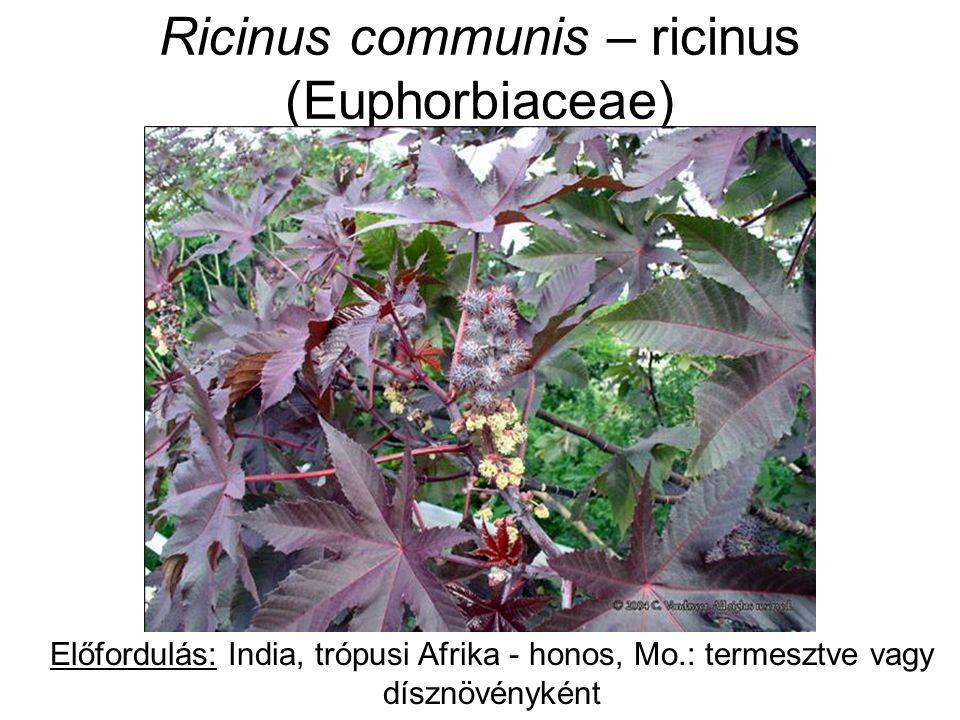 Ricinus communis - ricinus HA.: mag: 40-50% zsírosolaj (ricinolsav – hashajtó) + ricin toxalbumin (1 mg/g mag); növény más részei: ricinin alkaloid Hatás: ricin: helyileg erősen izgató, gyomor-béltraktus nyh.-károsító; felszívódva: kicsapja v.