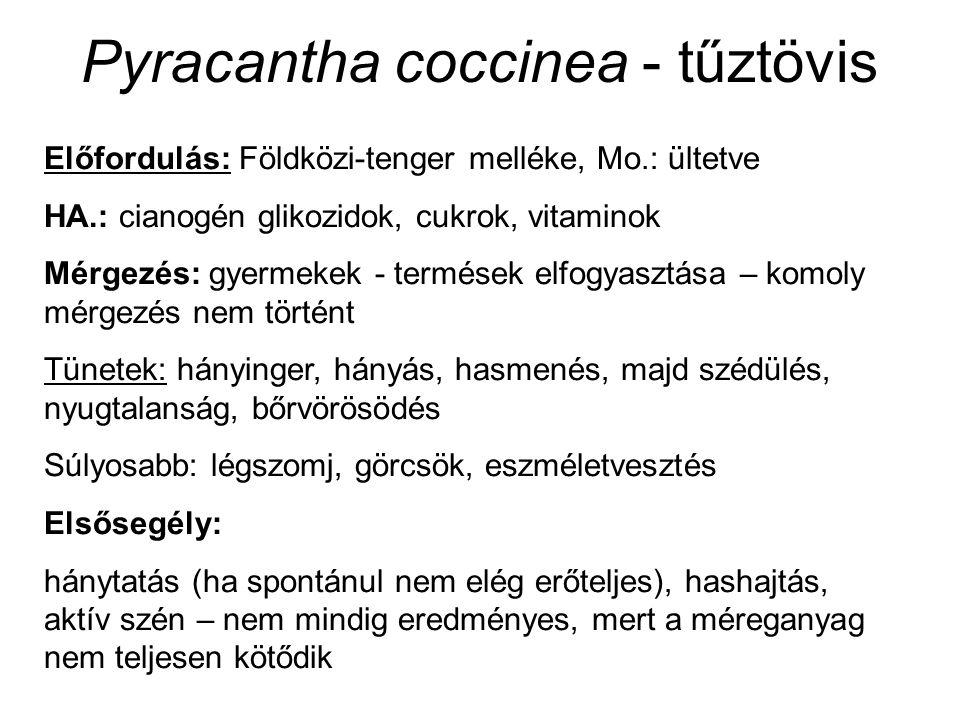 Sambucus nigra - fekete bodza (Sambucaceae / Caprifoliaceae) Előfordulás: egész Eu.: cserjések, erdők, pl.