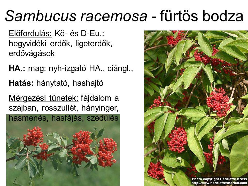 Házi len – Linum usitatissimum (Linaceae) Mag mérgező volta: ellentmondásos adatok 1,5% cianogén vegyület (30-50 mg HCN / 100 g friss tömeg) (Teuscher és Lindequist 1988) akut mérgezés nem ismert 3 x 15 g mag többhetes használata (hashajtóként) sem mutatott mérgező hatást