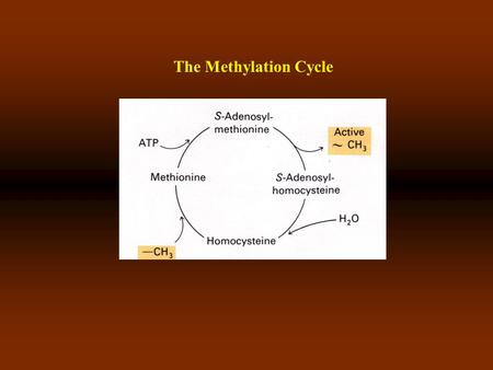 The Methylation Cycle. Cytosine and dervatives Synthesis of SAM SAM is the methyl donor in biological rxn-s.