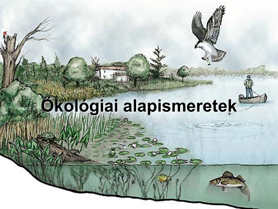 Ökológia  Biológia tudományának része  Egyed feletti szerveződési szintek  Környezeti tényezők (külső jellemzők) és környezeti tűrőképességek (belső jellemzők) összekapcsoltsága  Populációk tér- és időbeli mennyiségi eloszlásának és az ebben történő változásoknak vizsgálata  Élőlények egymás közötti és környezetükkel való kölcsönhatásait kutatja  Élőlény központúság jellemzi  Oksági összefüggésekre kíváncsi (törvényszerűségek, létrejött struktúrák)