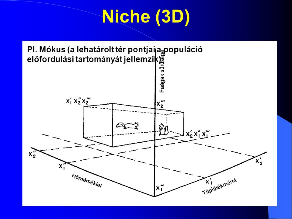 Niche átfedés S1S1 S2S2 Együtt élő populációk: van Niche-átfedés (létezik olyan létfeltétel, ami több populáció számára megfelelő) Átfedés esetén a két populáció egymás mellett létezve verseng az adott forrásért Nincs átfedés: nem élhetnek egymás mellett
