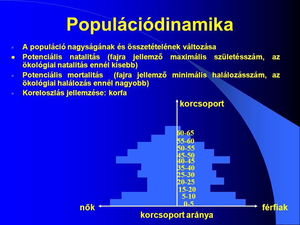 Növekvő populáció (piramis) Stabil populáció (harang) Csökkenő populáció (urna) 1 1 1 1 - fejlődő kor 222 2 - kifejlett kor 3 33 3 - öregedő kor Korfa típusok Gyorsan változó korfa
