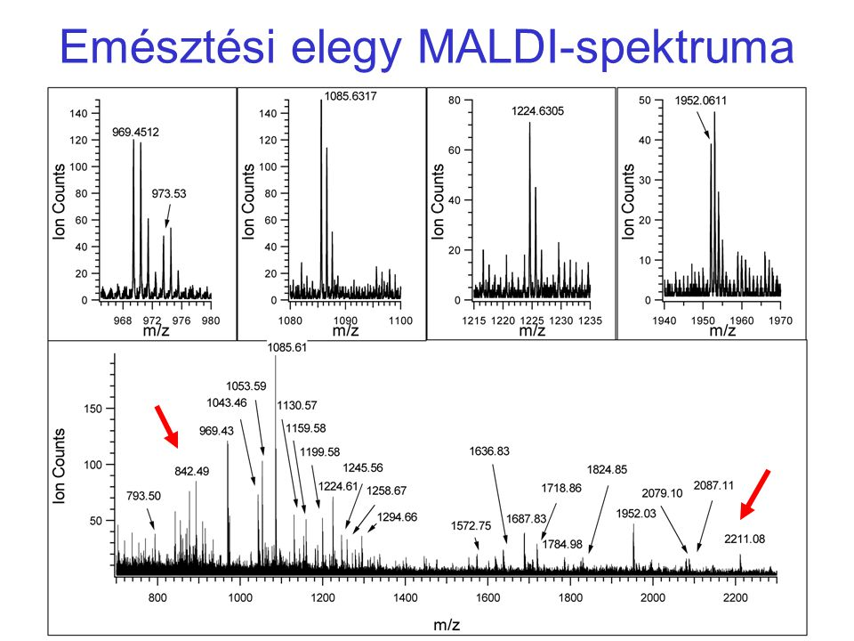Peptidek ESIMS analízise