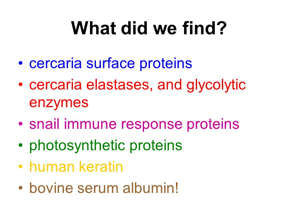 Where did they come from.contamination from the cercaria SECRETION – the real stuff.
