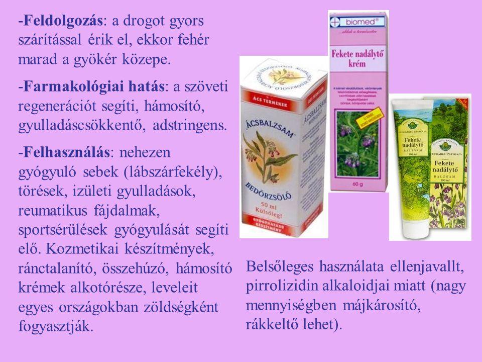 Pongyola pitypang (Taraxacum officinale) -Egyéb nevei: gyermekláncfű, pitypang, kákics -Család: Asteraceae -Drog: Taraxaci radix, Taraxaci folium, Taraxaci herba cum radix -Hatóanyag: triterpén (taraxaszterol), keserűanyaga a laktukapikrin, C-vitamin, A- és B-vitamin, gyökerében szaponin, az egész növény magas káliumtartalmú.