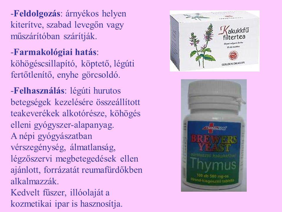 Nagy csalán (Urtica dioica) -Egyéb nevei: csalán, (csalány, csollán) -Család: Urticaceae -Drog: Urticae folium, Urticae herba, Urticae radix, ritkán Urticae fructus -Hatóanyag: klorofill, karotinoidok, vitaminok (B, C, K, U), triterpének, szterolok, glukokinin, flavonoidok, aminok, ásványi anyagok, a gyökérben: kumarin, cseranyagok, lignán