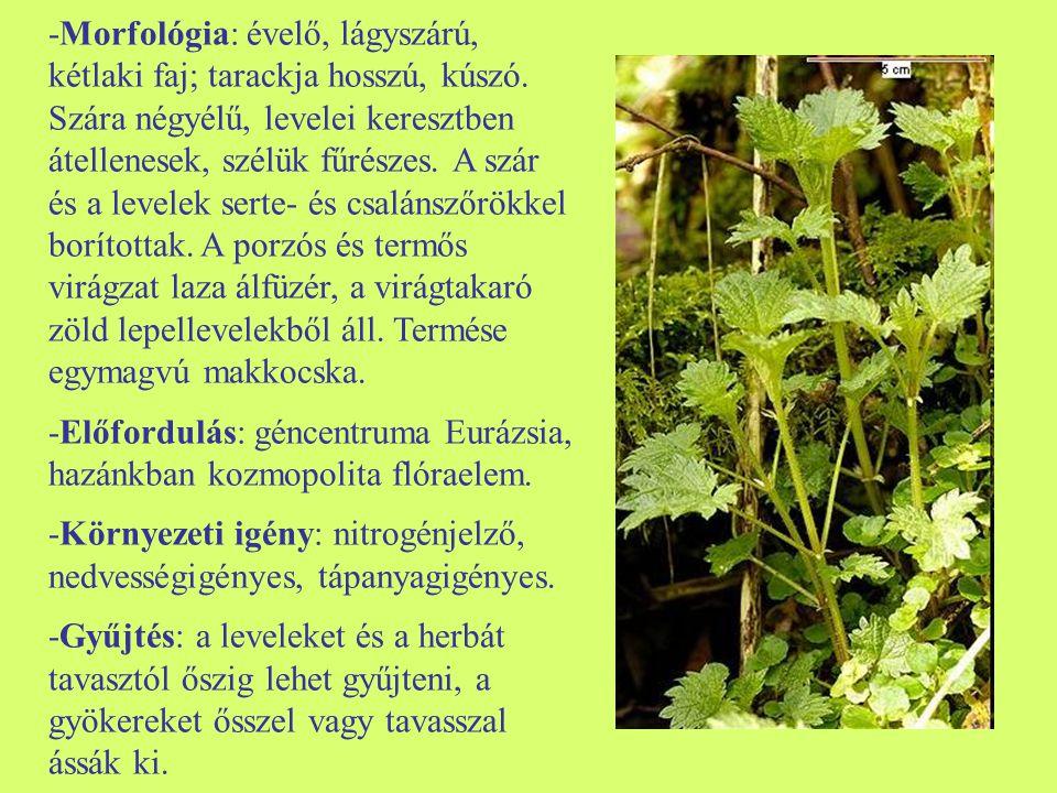 -Feldolgozás: a levelek és a herba szárítása tiszta, szellős helyen, gyakori forgatás mellett vagy műszárítóban történhet.