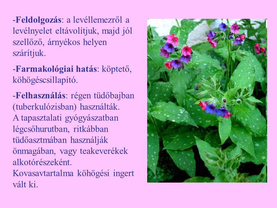 Orvosi szappanfű (Saponaria officinalis) -Egyéb nevei: szappanfű, habzófű, (tajtékzó szappanfű, császárszakál, tajtékgyökér) -Család: Caryophyllaceae -Drog: Saponariae rubrae herba, Saponariae rubrae radix -Hatóanyag: szaporubrin, szaponin, kevés zsírsav, kvillájasav, cukor, más szénhidrátok, nyomokban zsírt is tartalmaz.