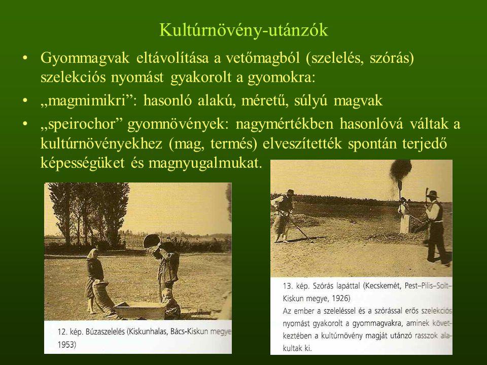 Kultúrnövény-utánzók, lengyomok Lengyomok: lenvadóc (Lolium remotum), lenhabszegfű (Silene linicola), lenkeserűfű (Polygonum linicolum), lenkonkoly (Agrostema linicola), óriás csibehúr (Spergula maxima), duzzadt gomoborka (Camelina alyssum), lenfojtó aranka (Cuscuta epilinum) Néhány évszázad vagy évezred alatt keletkeztek Nagymértékben specializálódtak