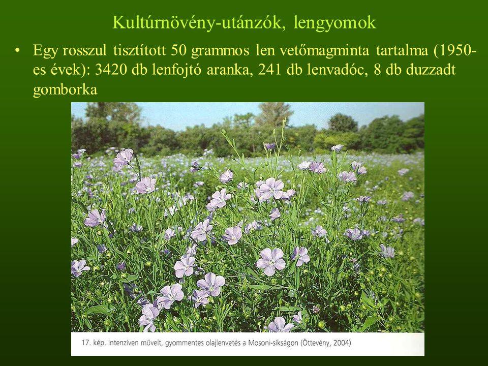 Gabonakísérők Legismertebb gabonagyomok: konkoly (Agrostema githago), kék búzavirág (Centaurea cyanus), szédítő vadóc (Lolium temulentum), gabonarozsnok (Bromus secalinus), kövér rozsnok (Bromus grossus)