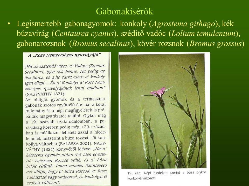 Gabonakísérők: a konkoly Konkoly adaptációs tulajdonságai: gabonához hasonló magasság, egyszerre történő érés, nem teljesen felnyíló toktermés, hasonló magsúly és méret, magnyugalom hiánya Régészeti leletek bizonyítják a magméret evolúciós növekedését A konkoly anyagai elősegítik a búza gyökérzetének növekedését