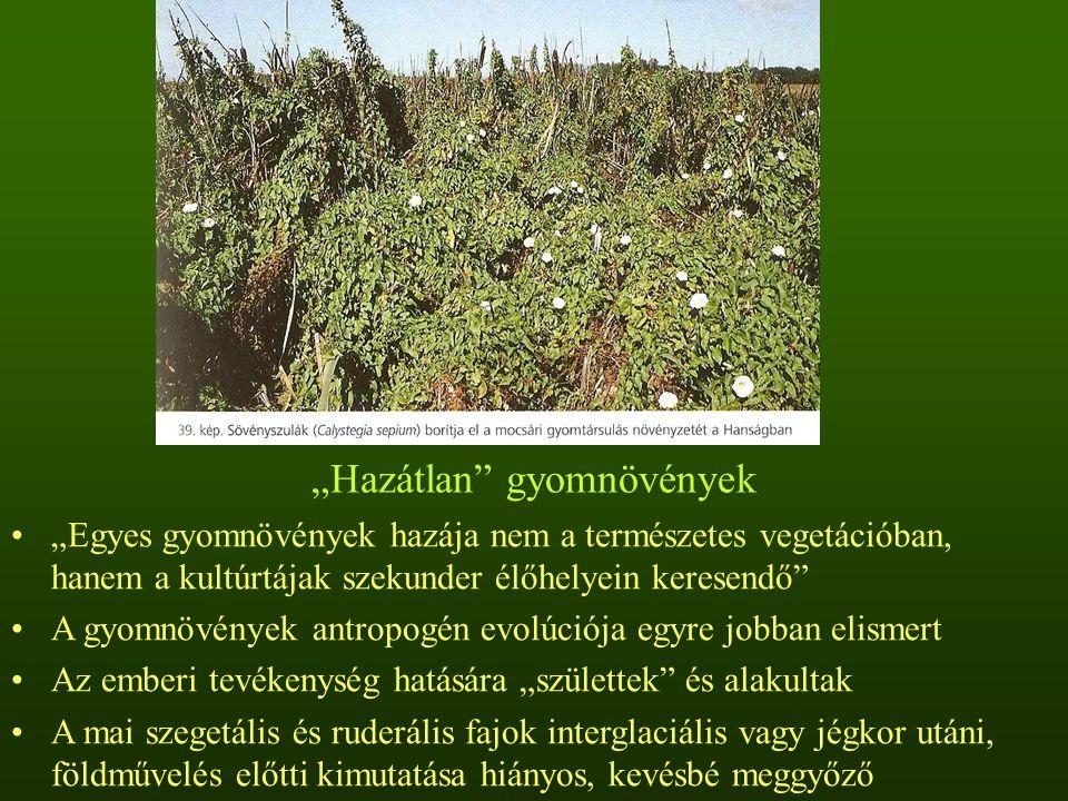 """""""Hazátlan gyomnövények A pipacs valószínűleg antropogén élőhelyen, emberi befolyás hatására keletkezett"""
