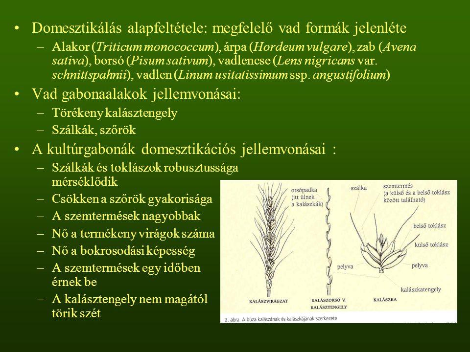 Szekunder kultúrnövények Gyomnövényekből fejlődtek ki, tágabb tűrőképességűek A rozs (Secale cereale) egy vadon élő, évelő kiindulási fajból származik Elő-Ázsiában a gyomrozs (Secale ancestrale) búzavetésekben gyomként fordult elő, száraz években elszaporodott, nem vetették, de learatták A rozs terjedését elősegítette a hűvösebb klíma és az aratási technikák megváltozása