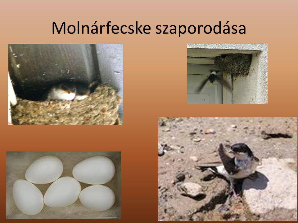 Fenyvescinege (énekes madár) Elterjedési területükön belül sokféle erdőben élnek.