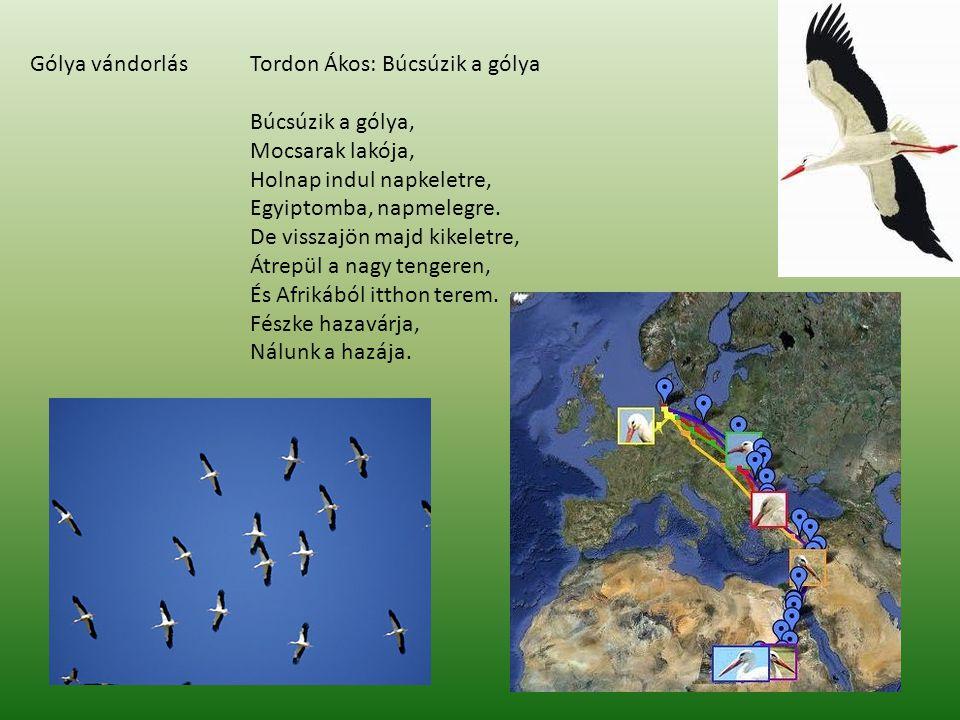 Füstifecske (költöző madár) Az északi félteke víz közeli, nyílt térségeinek jól ismert madarai.