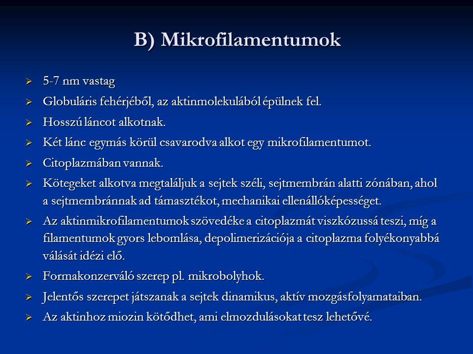   A miozin: farki és mozgékony feji rész, amely az aktin-mikrofilamentumhoz kötődik.
