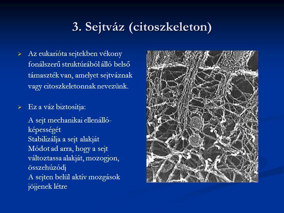 Fehérjetermészetű fonalak Mikrotubulusok Mikrofilamentumok Intermedier filamentumok Mikrotubulusok   Csőszerű struktúra   25 nm vastag Mikrofilamentumok  Vékony fonalak  5-7 nm vastagságú Intermedier filamentumok  Fonálszerű struktúrák  Vastagsága 10 nm