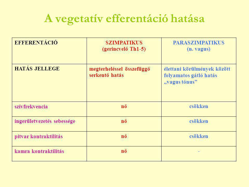 Kémiai szabályozás Hormonok adrenalin, noradrenalin, tiroxin, kortizol Ionok  Ingerlékenység kontraktilitás       Na K Ca Mg  munkaizomzat bénítása