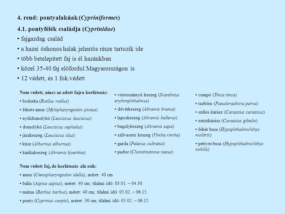 Leánykoncér (Rutilus pigus virgo) Duna vízrendszerében bennszülött alfaj (30 cm) az utóbbi 20 évben csak néhány folyóból került elő ritkasága miatt gazdaságilag nincs jelentősége Európa ritka és sebezhető halai közé tartozik legnagyobb veszélyt a vizek szennyezése, folyók duzzasztása jelenti  élőhely beszűkül védett, eszmei értéke 10.000 Ft (fok.védett is lehetne!) Gyöngyös koncér (Rutilus frisii meidingeri) a Felső-Duna medencéjének néhány szubalpin tavában él (Chiem-tó, St.