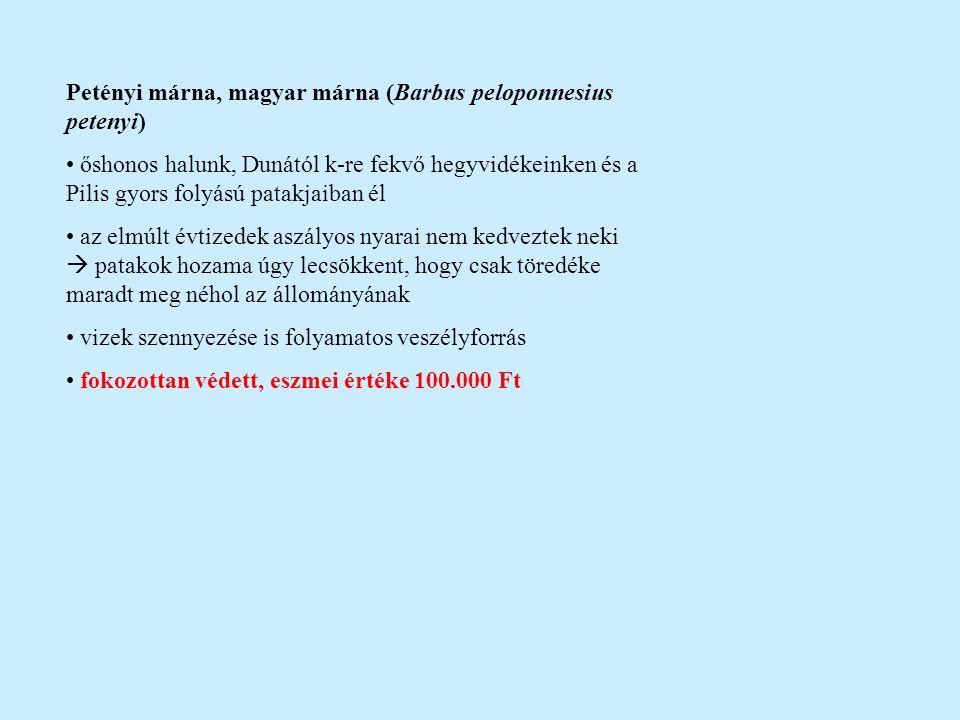 Fenékjáró küllő (Gobio gobio) őshonos, megtalálható Európa nyugati partjaitól az Amur vidékéig hegy-, dombvidéki patakok, kis folyók domolykózónája élőhelye a nagyobb folyókban bárhol előfordulhat, tavakban is megél közvetlen gazdasági jelentősége nincs (10-15 cm), ragadozótáplálék védett, eszmei értéke 2.000 Ft Halványfoltú küllő (Gobio albipinnatus) Közép- és Kelet-Európában él, őshonos halfajunk folyókban és tavakban is előfordul, dévérzóna jellemző faja csak 1960 óta különböztetik meg a felpillantó küllőtől közvetve gazdaságilag is jelentős (nagy gyakoriságú, ragadozótáplálék) gyakori, elszaporodóban lévő hala vizeinknek szűk elterjedése miatt lett védett védett, eszmei értéke 10.000 Ft