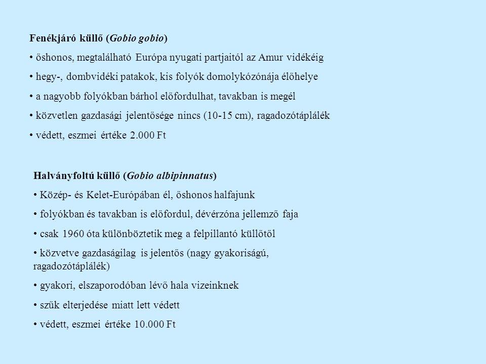 Felpillantó küllő (Gobio uranoscopus) folyók hegylábi szakaszán él (pér-, paduczóna) Duna vízrendszerének bennszülött faja hazai elterjedéséről sok a téves és bizonytalan adat jelenleg néhány hazai élőhelyéről tudunk (Dráva, Mura, Tisza) kicsinysége (10 cm) és ritkasága miatt nincs gazdasági jelentősége természetvédelmi értéke viszont nagy védett, eszmei értéke 50.000 Ft Homoki küllő (Gobio kessleri) Duna vízrendszerében bennszülött, a Kárpát-medencében alakult ki áramláskedvelő, a márnazóna jellemző hala előfordulása 1980-tól bizonyos, korábban felpillantó küllőnek vélték gazdasági jelentősége nincs természetvédelmi értéke megközelíti a felpillantó küllőét folyóink márnazónája még sok helyen eredetinek mondható védett, eszmei értéke 10.000 Ft (lehetne magasabb is!)