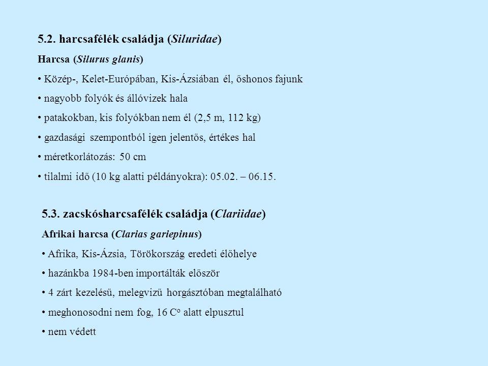 6.Rend: csukaalakúak (Esociformes) 6.1.