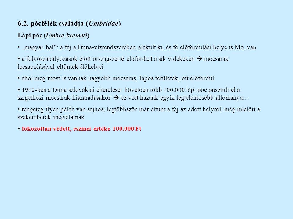 7.rend: lazacalakúak (Salmoniformes) 7.1.