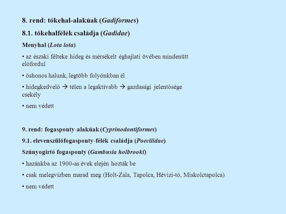 10.rend: pikóalakúak (Gasterosteiformes) 10.1.