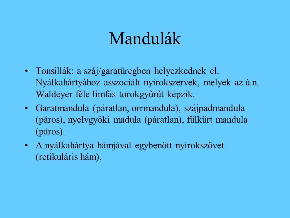 Tonsilla lingualis. Felszíni hám, retikuláris hám, kripták, follikulusok.
