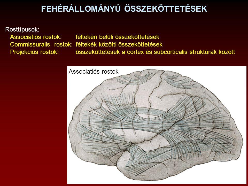 COMMISSURALIS ROSTOK (Commissura habenularum) Corpus callosum Commissura anterior (Commissura posterior)
