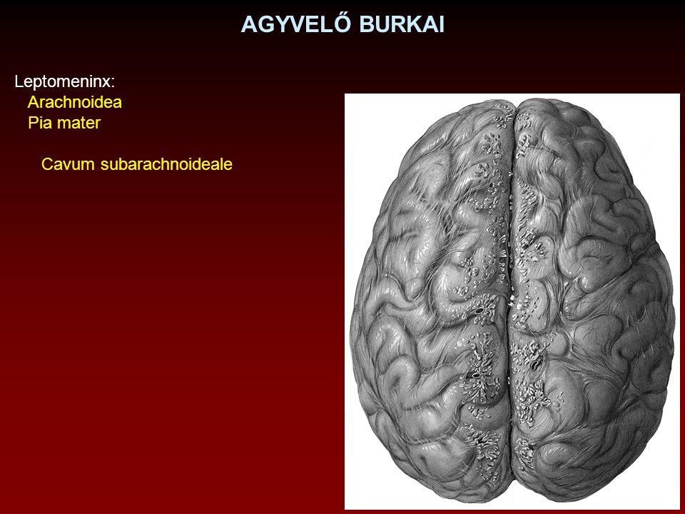 AGYKAMRÁK Canalis centralis IV. agykamra Aqueductus cerebri III. agykamra