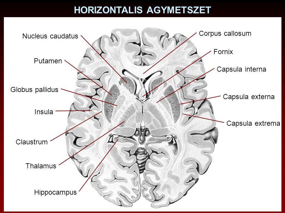 Irodalom: Barr ML, Kiernan JL: The Human Nervous System, 1993, J.B.