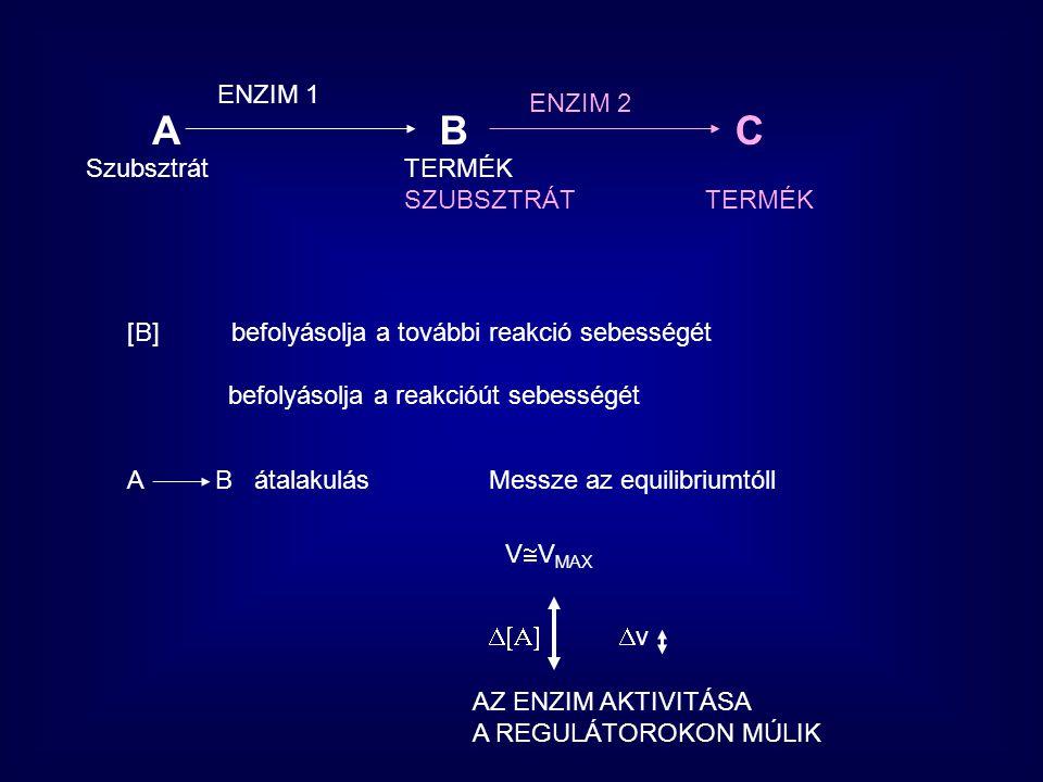 A SZABÁLYOZÁS ERŐSSÉGE A B C D E F Z v 1 v 2 v 3 v 4 v 5 v n Fluxus kontroll  v (A-Z)  v A-B Fluxus kontroll érték: 0-tól 1-ig Ha 0, az adott reakció sebességének változtatása egyáltalán nem befolyásolja az út sebességét Ha 1, akkor csak ez a reakció bír befolyással az egész út sebességére Általában egy metabolikus úton egy enzim bír kitüntetten szabályozott jelleggel