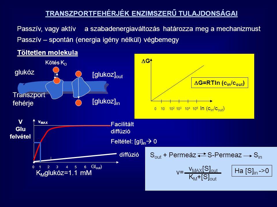 A TRANSZPORTEREK SPECIFICITÁSA CukorKMKM D - glukóz1.2 L - glukóz>3000 D - mannóz20 D - galaktóz30 TÖLTÉSSEL BÍRÓ MOLEKULÁK TRANSZPORTJA  G=RTln(C in /C out ) + zF  V Membrán potenciál Faraday GG Mem.