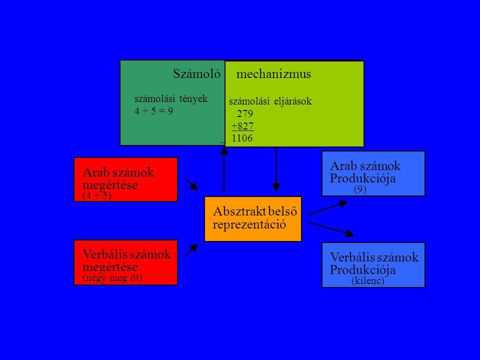 A számmegértő- és a szám produkciós mechanizmus Mindkettő a lehetséges inputoknak megfelelően két újabb alrendszerből (arab és nyelvi) áll.
