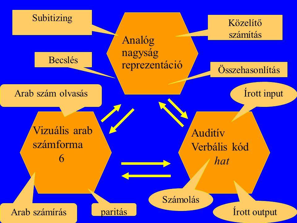 Nincs belső reprezentáció, ami összeköti a többi alrendszert egymással, mint McCloskey-nál (ez is jelezheti a 3 rendszer eltérő eredetét): arab  verbális, bonyolult, többlépcsős folyamatot foglal magába, tartalmazva a szintaktikai folyamatot és a lexikai jelek visszahívását verbális  analóg, a bemeneti szám hozzávetőleges értéke szerint aktivizálódik a számegyenes analóg  verbális, itt pont fordított a folyamat, az a fontos, hogy meg tudjuk határozni, a számegyenes egy- egy szegmenséhez milyen pontos érték tartozik