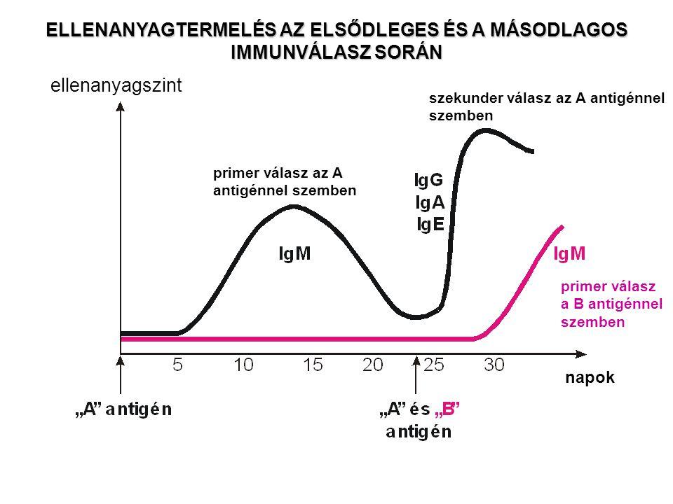 AZ ELLENANYAGOK EFFEKTOR FUNKCIÓI 1)Neutralizáció 2)Opszonizáció (facilitált fagocitózis) 3)ADCC 4)Komplement aktiváció (ld.
