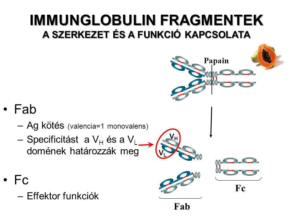 Pepszin Fc peptidek F(ab') 2 Fab –antigen binding Fc –effector functions F(ab')2 –Antigén kötés bivalens.