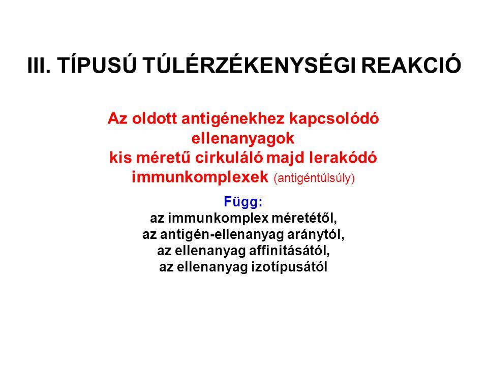 Az immunkomplexek mérete A késői immunválsz során ellenanyag felesleg van A korai immunválsz során az antigén feleslegben van Később azanzigén és ellenanyag mennyisége hasonló Kisméretű komplexek, nincs komplement aktiváció, a komplexek hosszabb ideig jelen vannak a keringésben Nagyméretű komplexek, komplement aktiváció, a komplexek eltávolítása hatékony.