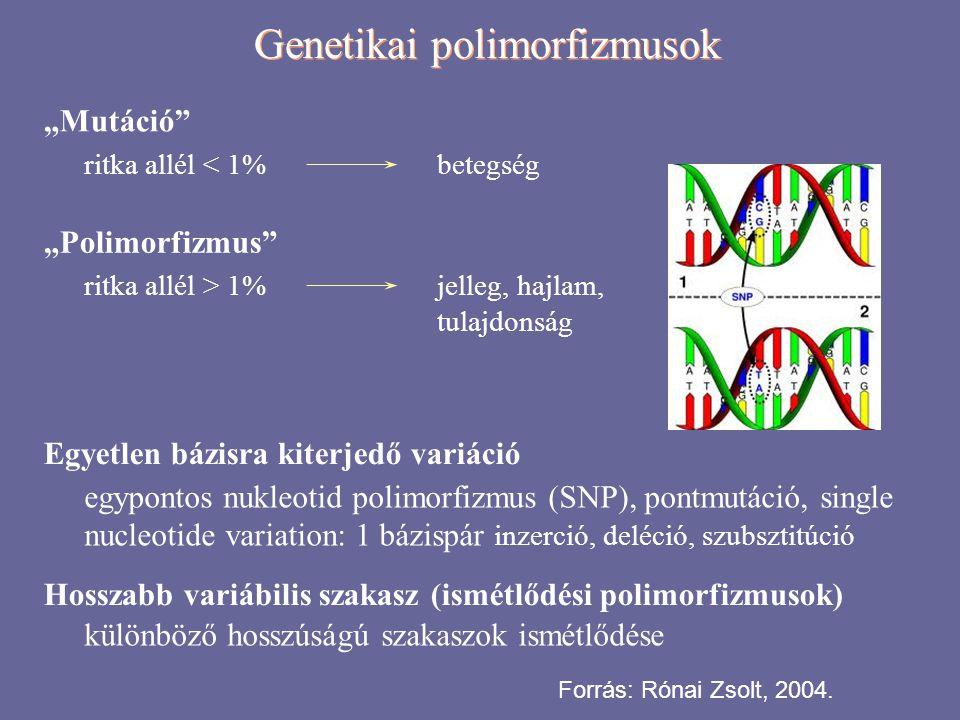 Genetikai polimorfizmusok Ismétlődési polimorfizmusok  Transzpozon eredetű ismétlődések  long interspersed element (LINE)  short interspersed element (SINE)  retrovírus-szerű elemek hosszismétlődés 6–8 kb 100–300 bp 3–11 kb 850 000 1 500 000 450 000  Szegmentális duplikáció  1–200 kb blokkok ismétlődése ugyanazon vagy másik kromoszómán  Egyszerű direkt ismétlődések  1–13 bp hosszú szakasz: mikorszatelliták; trinukleotid ismétlődések  14–500 bp-os szakaszok: miniszatelliták / VNTR-ek (variable number of tandem repeats) Forrás: Rónai Zsolt, 2004.
