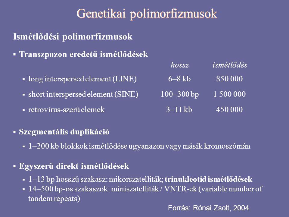 Genetikai polimorfizmusok típusai (összefoglalás + példák) Egynukleotidos polimorfizmus (SNP, single nucleotide polymorphism) A DNS nukleotid-szekvenciáján belül egy nukleotid cseréje Példa: COMT (katekol-O-metiltranszferáz) Val158Met polimorfizmus Allélok: G és A Genotípusok:GG AG AA Asszociáció: A G allélt hordizóknál csökkent kognitív rugalmasság, szkizofrénia (?) Ismétlődési polimorfizmus (VNTR, variable number of tandem repeats, mikroszatellita) Ismétlődő rövid szekvenciák számbeli különbözősége DRD4 (dopamin-receptor D4) polimorfizmus Allélok: 4-es, 7-es, 11-es számú ismétlődés Genotípusok: 4-4, 4-7, 4-11, 7-7.