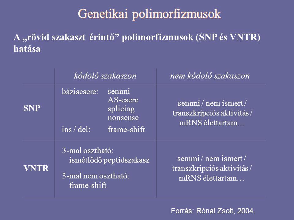 """Genetikai polimorfizmusok A """"rövid szakaszt érintő polimorfizmusok (SNP és VNTR) hatása SNP VNTR kódoló szakaszon báziscsere: semmi AS-csere splicing nonsense ins / del: frame-shift 3-mal osztható: ismétlődő peptidszakasz 3-mal nem osztható: frame-shift sarlósejtes anémia fruktóz intolerancia cisztikus fibrózis """"0 vércsoport Huntington-betegség 21-hidroxiláz deficiencia Forrás: Rónai Zsolt, 2004."""
