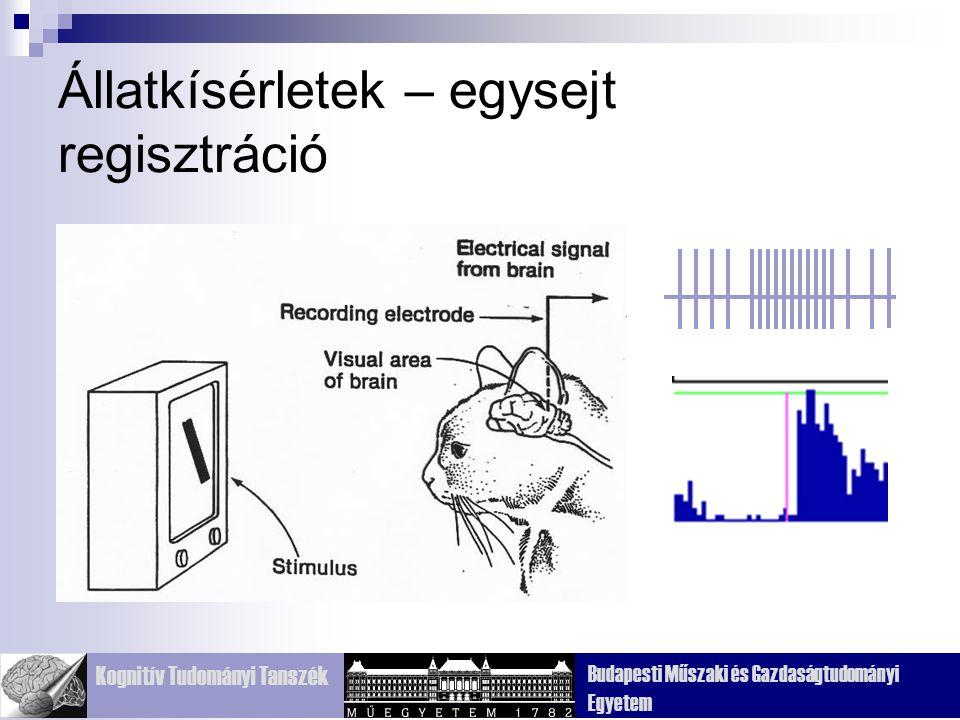 Kognitív Tudományi Tanszék Budapesti Műszaki és Gazdaságtudományi Egyetem Állatkísérletek – egysejt regisztráció