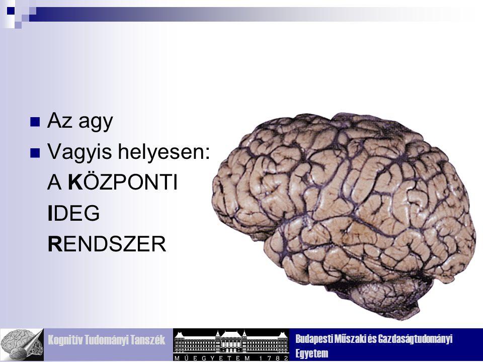 Kognitív Tudományi Tanszék Budapesti Műszaki és Gazdaságtudományi Egyetem Az agy Vagyis helyesen: A KÖZPONTI IDEG RENDSZER