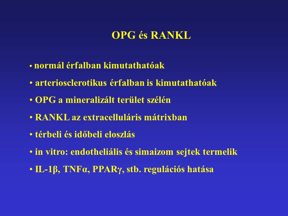 In vivo OPG-/- egér: arteriosclerosis; megelőzhető: OPG-vel D vitamin okozta vascularis calcificatio megelőzhető OPG-vel
