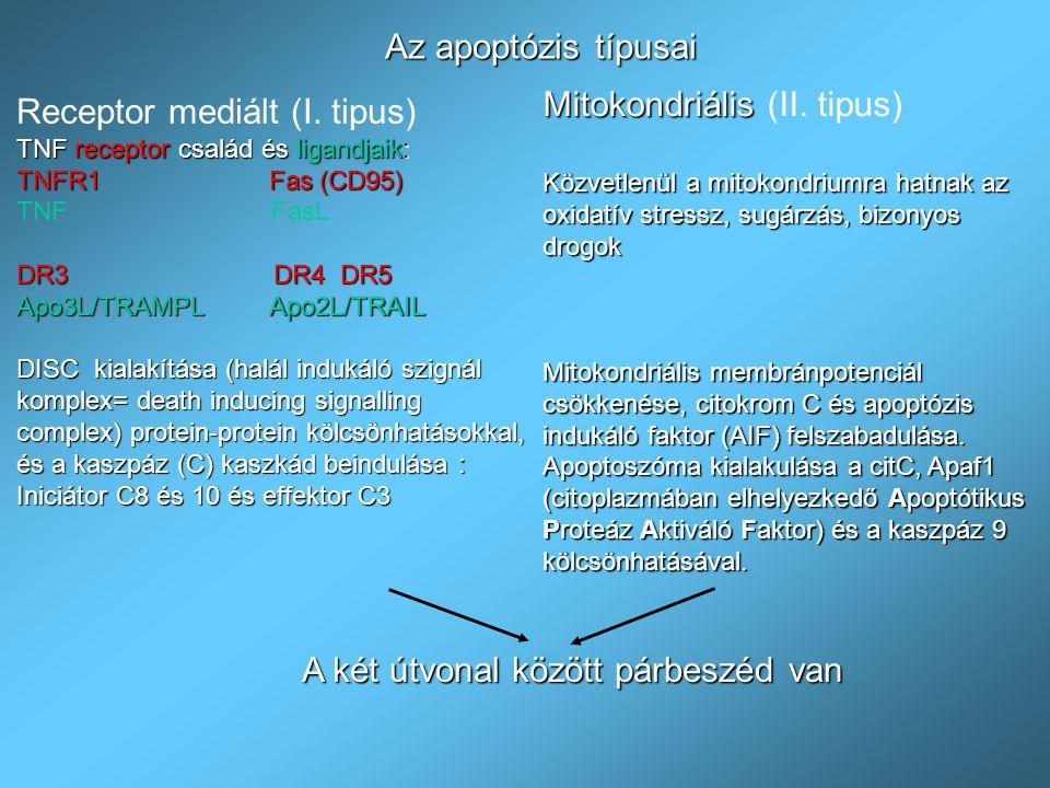 A halál receptorok a Tumor Nekrózis Faktor Receptor (TNFR) családba tartoznak : Cisztein gazdag extracelluláris domain Konzerváltság az intracelluláris domainben- halál domain ( death domain =DD) A ligandok a TNF gén szupercsaládba tartoznak szolubili vagy membrán kötött fehérjék: TNF  =Tumor Necrosis Factor TNF  =Limfotoxin FasL=Fas Ligand TRAMPL=TNF Related Apoptosis-inducing Membrane Protein Ligand TRAIL=TNF Related Apoptosis-Inducing Ligand Receptoron keresztül történő apoptózis indukció: TNF receptor szuperfamilia és ligandok Receptor-Based Induction of Apoptosis TNF Supergene family ligands TNFR1(p56,CD120a) DR4, DR5 (Apo2,TRAIL-R2)(TRICK2,KILLER) DR3(Apo3,TRAMP,LARD) CD95 (Fas, Apo1) TNF and LT  Apo3L(TWEAK) Apo2L/TRAIL CD95L(FasL) TRADDRIP FADD TRADDRIP PLAD: pre-ligand-binding assembly domain.