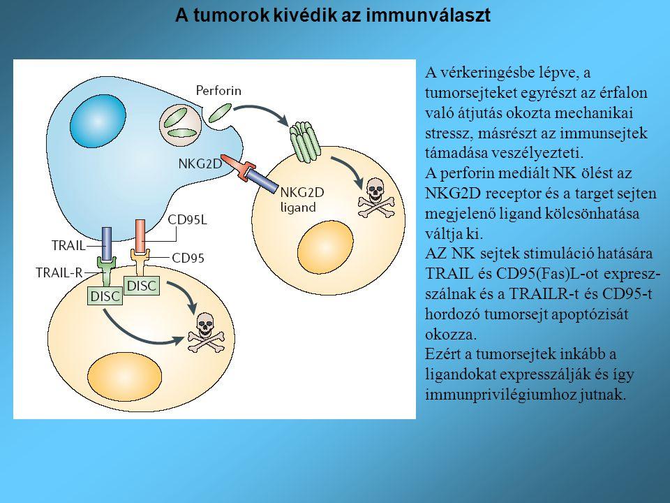 Kedvezőtlen Kedvező A tumorok megtapadása a másodlagos szövetben A tumorsejtek CD44-et (hialuronsav receptor) expresszálnak, amely az ECM komponensekhez kötik a tumorsejteket.