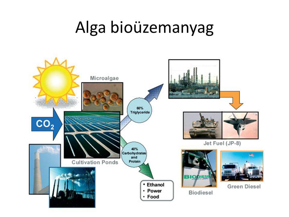 Nagy biomassza és olaj hozam Szinte bárhol termelhető Élelmiszer termeléssel nem verseng Hatékony fotoszintézis Igénytelen nevelési feltételek Változatos anyagcsere termékek DE: fotofermentor drága.