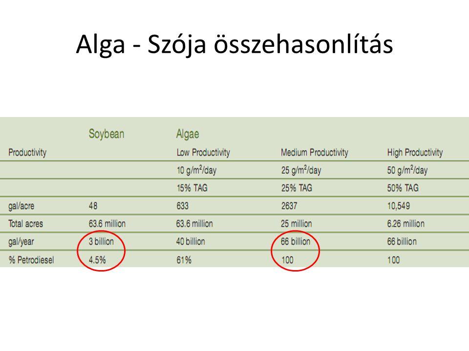 Alga biomassza termelés Makroalgák – Gyors növekedés – Igénytelen – Kis helyigény – Élelmiszer és energetikai biomassza Barna Vörös Zöld Laminaria: 4,2 millió tonna/év